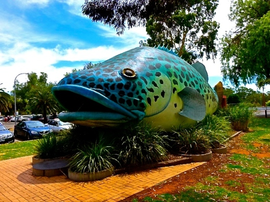 THE GIANT MURRAY COD