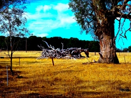ON THE ROAD - LEAVING THE GRAMPIANS - Version 2