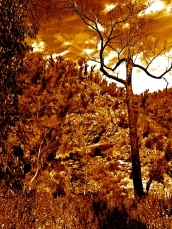THE GRAMPIANS - VIEW 4- MACKENZIES FALLS - Version 3