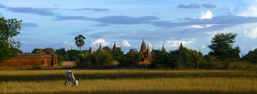 15. ACT 4 - ADVENTURE - TONY'S TOUS - TEMPLES AND COW, BAGAN, MYANMAR.JPG
