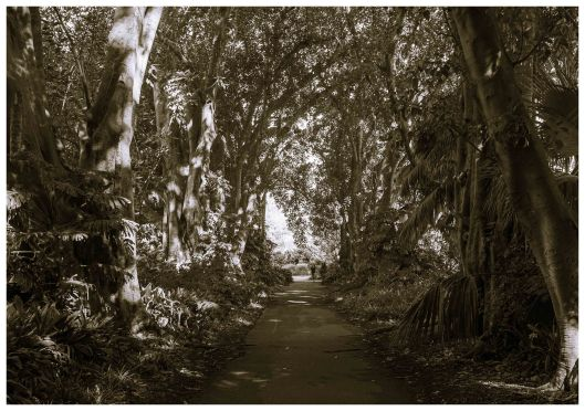 AUSTRALAIN ROMANTICISM - Murdoch Avenue